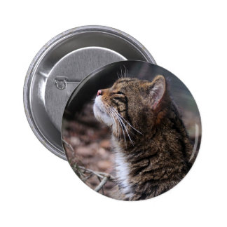 Wildcat Contentment pin