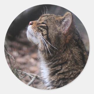 Wildcat Contentment stickers
