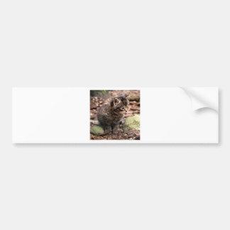 Wildcat Kitten Bumper Stickers