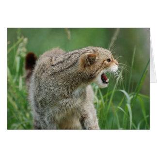 ¡WILDcat no llamado para nada! tarjeta