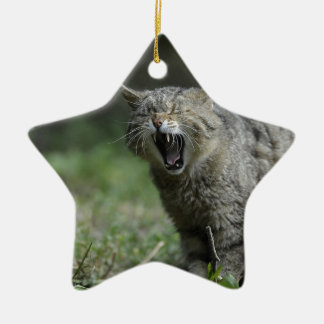 Wildcat Double-Sided Star Ceramic Christmas Ornament