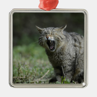 Wildcat Square Metal Christmas Ornament