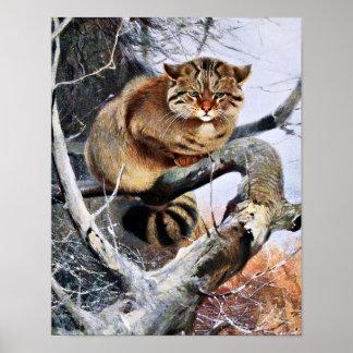 Wildcat Vintage Artwork Poster