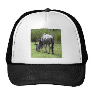 Wildebeest Backside Trucker Hat