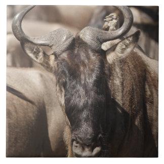 Wildebeest Blanco-barbudo con Wattled Starling Azulejo Cuadrado Grande