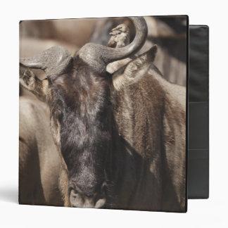 "Wildebeest Blanco-barbudo con Wattled Starling Carpeta 1 1/2"""