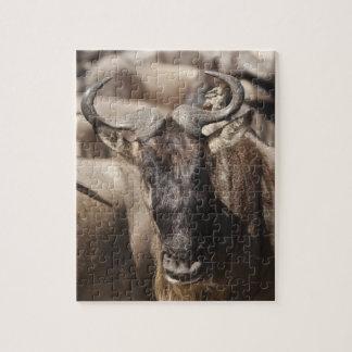 Wildebeest Blanco-barbudo con Wattled Starling Puzzle Con Fotos