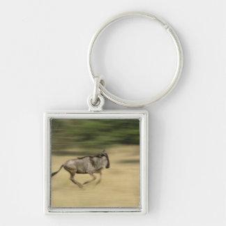 Wildebeest en el movimiento, taurinus del Connocha Llavero Cuadrado Plateado