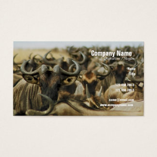 Wildebeest gnus Kenya safari profile cards custom