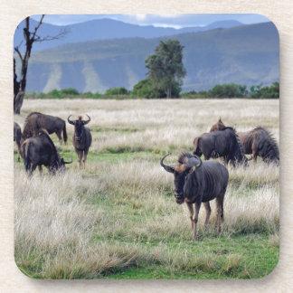 Wildebeest herd coaster