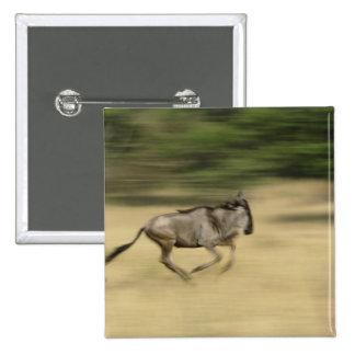 Wildebeest in motion, Connochaetes taurinus, Pins