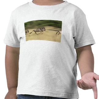 Wildebeest in motion Connochaetes taurinus T Shirt