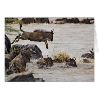 Wildebeest jumping into Mara River during Card