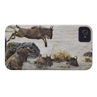 Wildebeest jumping into Mara River during iPhone 4 Cover