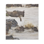 Wildebeest jumping into Mara River during Memo Pad