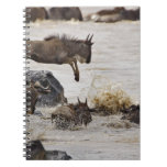 Wildebeest jumping into Mara River during Note Books