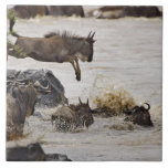 Wildebeest jumping into Mara River during Tile