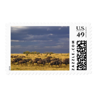 Wildebeest migration and storm clouds, postage