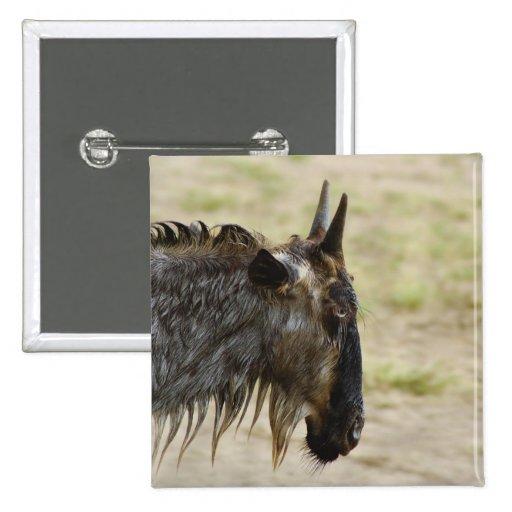 Wildebeest migration Kenya wildlife buttons badges