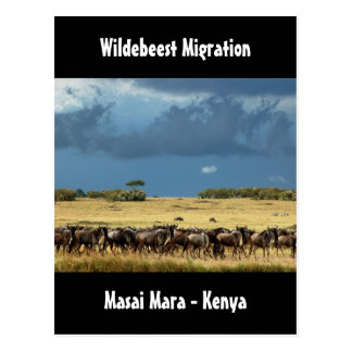 Wildebeest migration Masai Mara Kenya postcard