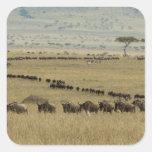 Wildebeest o Gnu Blanco-barbudo, Connochaetes 2 Pegatina Cuadrada