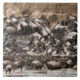 Wildebeest o Gnu Blanco-barbudo, Connochaetes Azulejo Cuadrado Grande