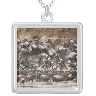 Wildebeest o Gnu Blanco-barbudo, Connochaetes Grimpola Personalizada