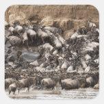 Wildebeest o Gnu Blanco-barbudo, Connochaetes Pegatina Cuadrada