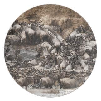 Wildebeest o Gnu Blanco-barbudo, Connochaetes Platos De Comidas