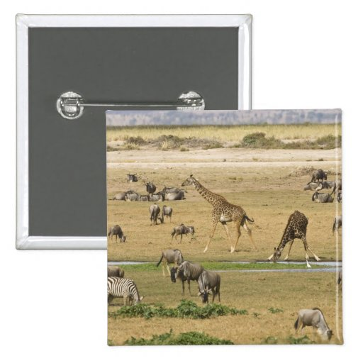 Wildebeests, Zebras and Giraffes gather at a 2 Inch Square Button