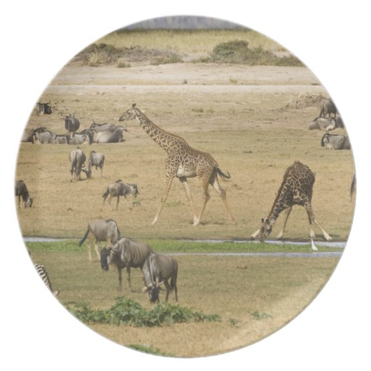 Wildebeests, Zebras and Giraffes gather at a Melamine Plate