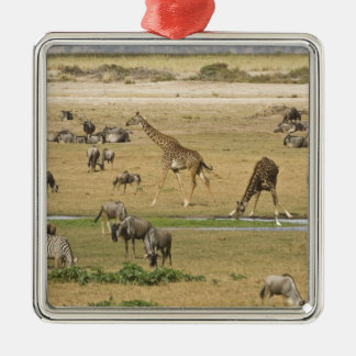 Wildebeests, Zebras and Giraffes gather at a Metal Ornament