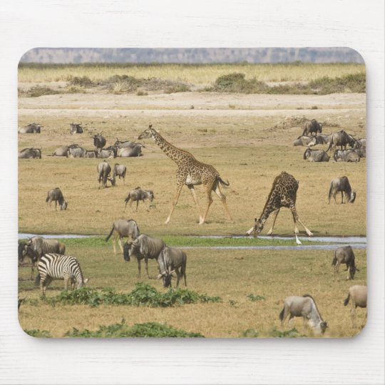 Wildebeests, Zebras and Giraffes gather at a Mouse Pad
