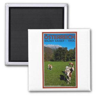 Wilder Kaiser - Cows Magnet