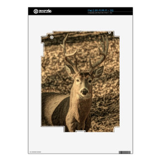 wilderness Camouflage outdoorsman whitetail deer Decal For iPad 2