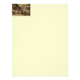 wilderness Camouflage outdoorsman whitetail deer Letterhead