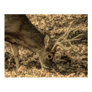 wilderness Camouflage outdoorsman whitetail deer Postcard