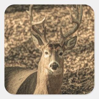 wilderness Camouflage outdoorsman whitetail deer Square Sticker