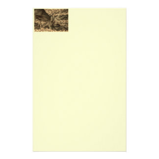 wilderness Camouflage outdoorsman whitetail deer Stationery