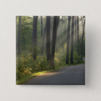 Wilderness Drive, Itasca State Park, Button