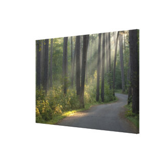 Wilderness Drive, Itasca State Park, Gallery Wrapped Canvas