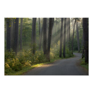 Wilderness Drive, Itasca State Park, Poster