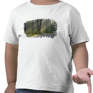 Wilderness Drive, Itasca State Park, T-shirt