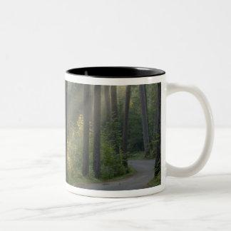 Wilderness Drive, Itasca State Park, Two-Tone Coffee Mug