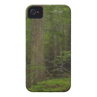 Wilderness Forest Nature Scenery Blackberry Case