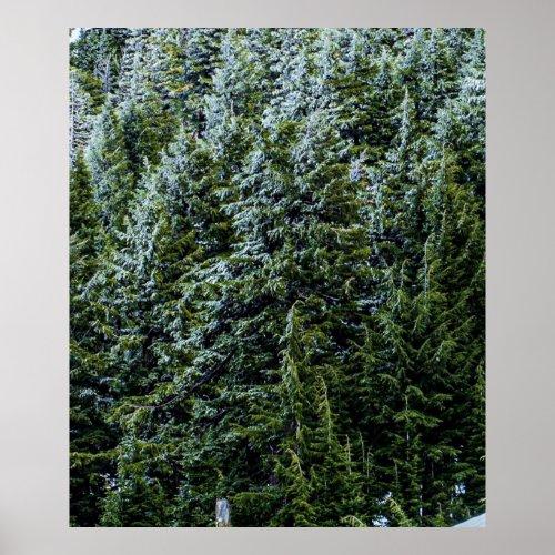 Wilderness Pines Dark Blue Green Forest Tree Fog