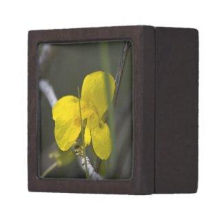 Wildflower 10 Gift Box planetjillgiftbox