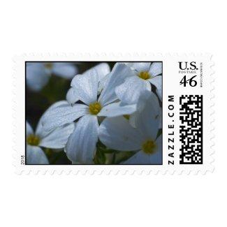 Wildflower 10 postage stamp