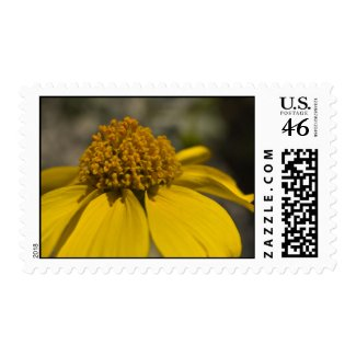 Wildflower 11 stamps