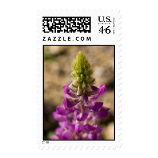 Wildflower 12 stamps